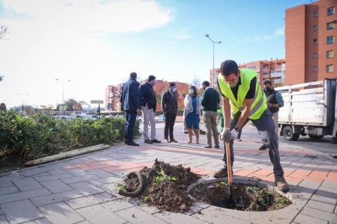 LA CAMPAÑA DE PLANTACIÓN EN LOS 11 DISTRITOS SUMARÁ CASI UN MILLAR DE NUEVOS ÁRBOLES EN LOS ALCORQUES
